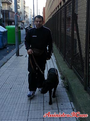 cane guida citta