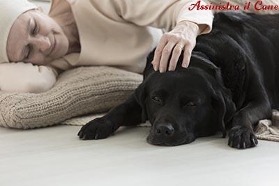 cane assistenza croniche