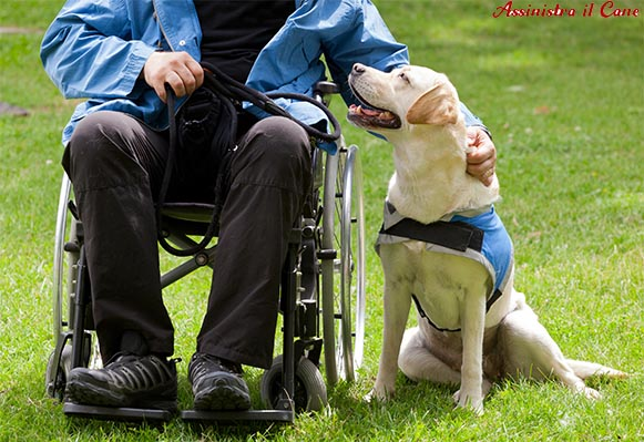 cane da assistenza