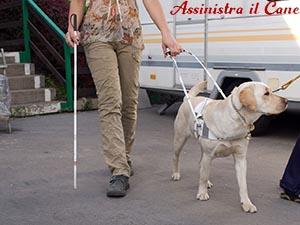 ottiene cane guida